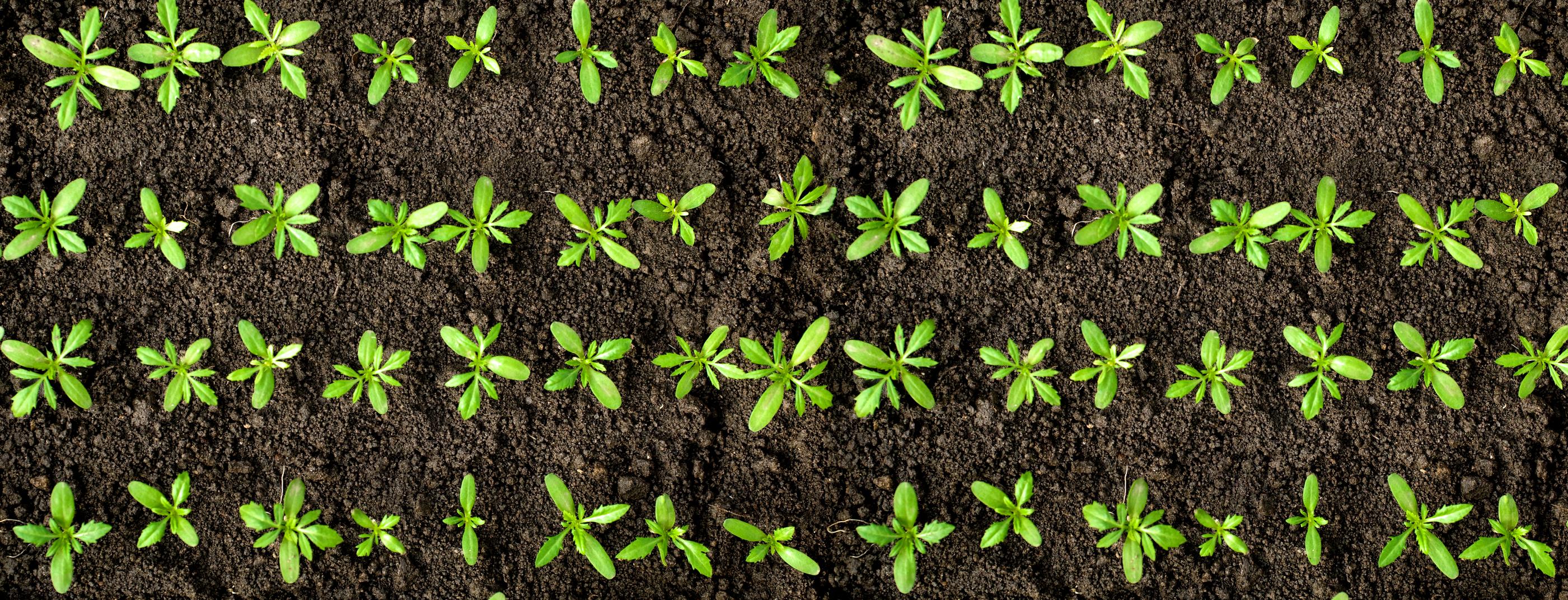dreamstime_m_8685171 new planting.jpg