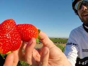 Sea Otters, Strawberries, and S-Pedelecs