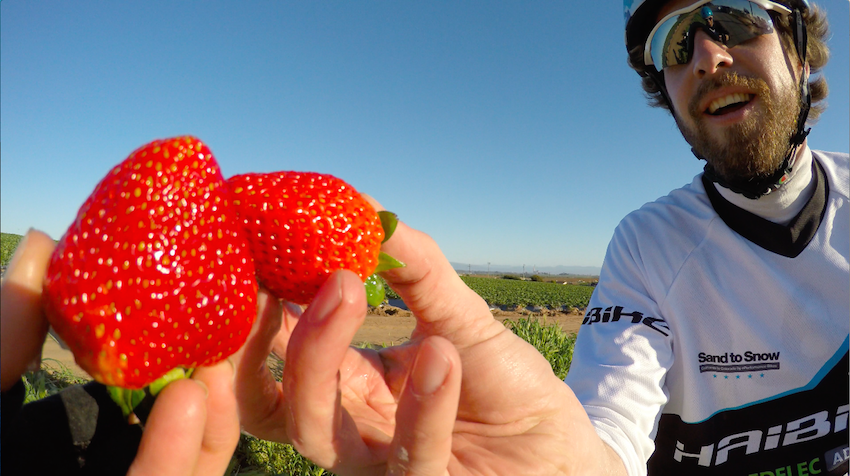 Pedelec Adventures Strawberries in California