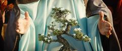 Bonsai_V01.jpg