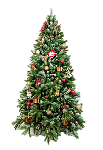 Beautiful christmas tree isolated on a w