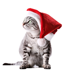 Christmas cat isolated on white_edited.p