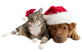 Cat and Dog with Santa Claus hats on whi