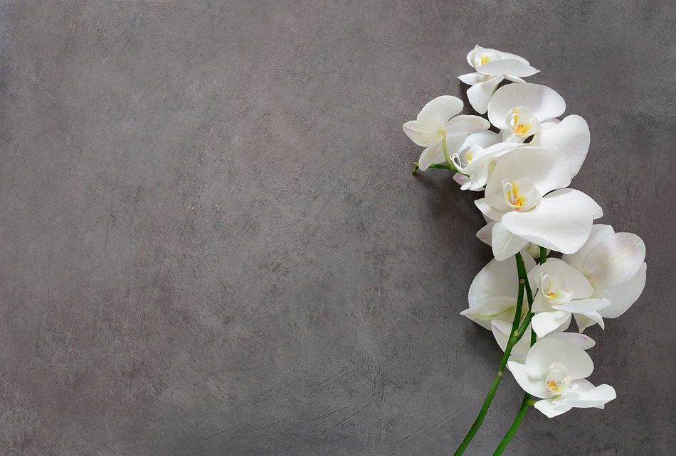 White orchid flower on a gray textured b