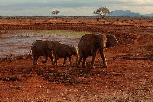 Kenia Elefantenfamilie