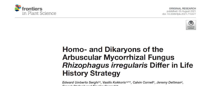 Homo- and Dikaryons of the Arbuscular Mycorrhizal Fungus Rhizophagus irregularis Differ in Life History Strategy