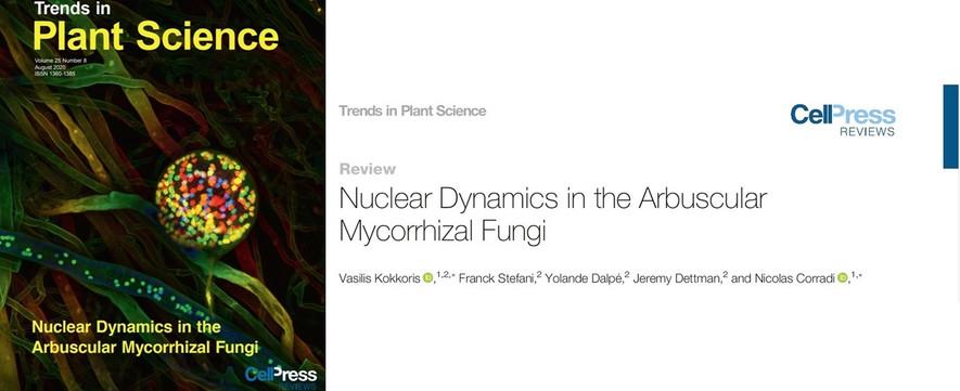 Nuclear Dynamics in the Arbuscular Mycorrhizal Fungi