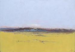 Mustard Field Taylor Ranch