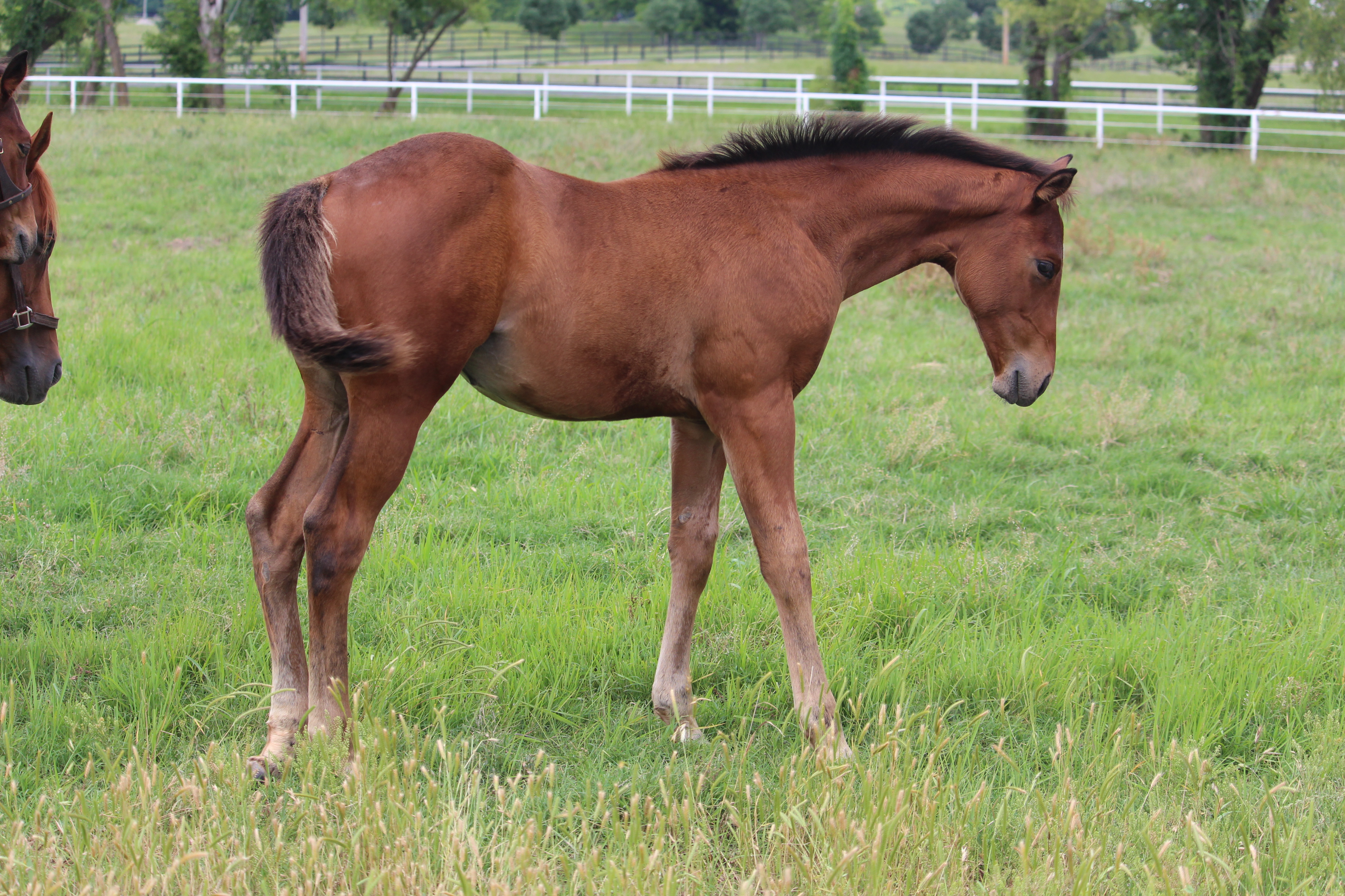 2020 Filly Code West out of Mystical Char