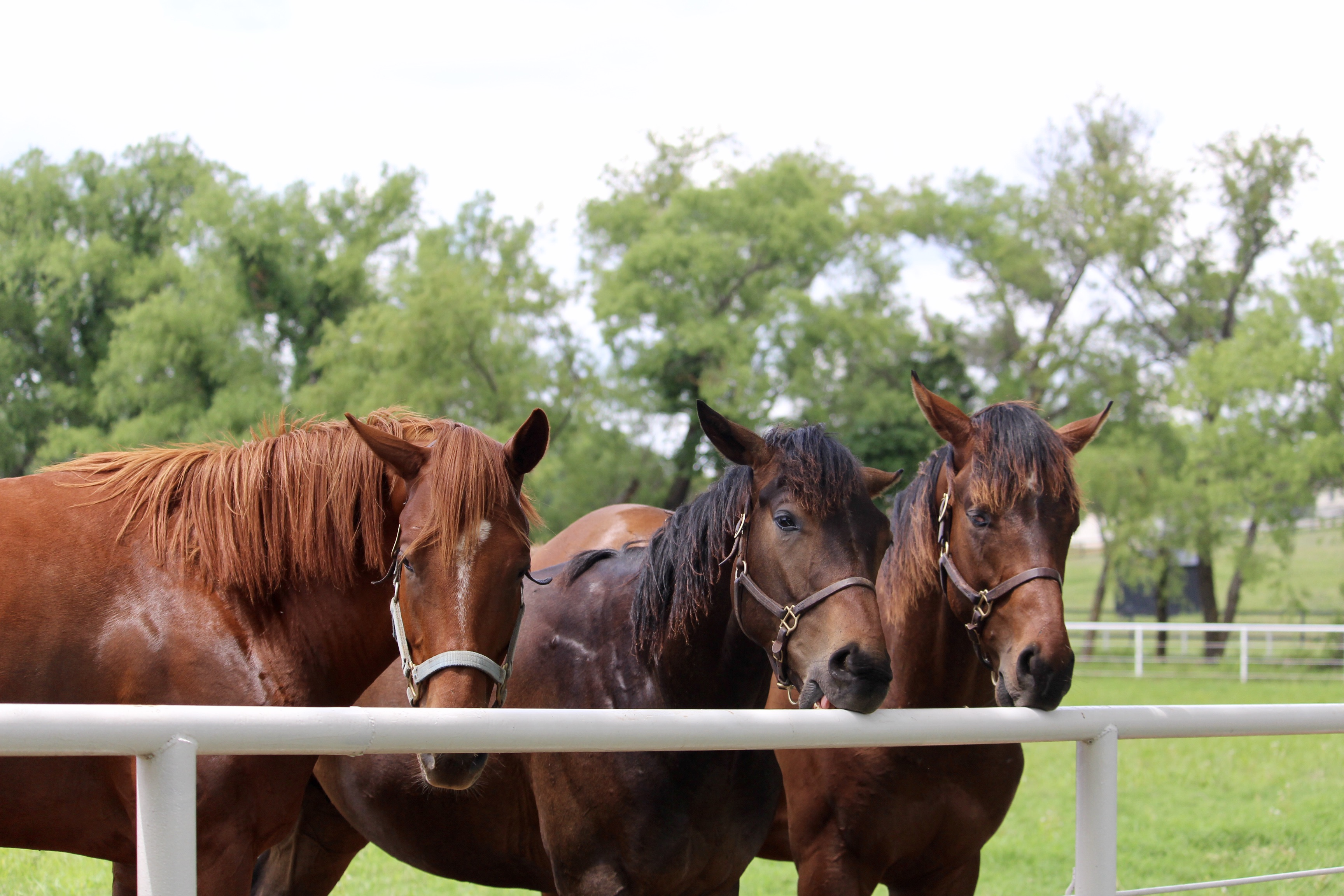 The Yearling colts