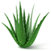 Top 5 Benefits of Aloe Vera