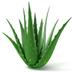 Top 5 Benefits of Aloe Vera