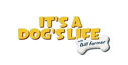 dogs life.png