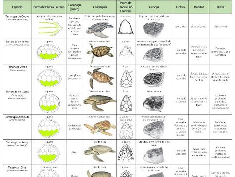 Tartarugas Marinhas do Brasil e do Mundo