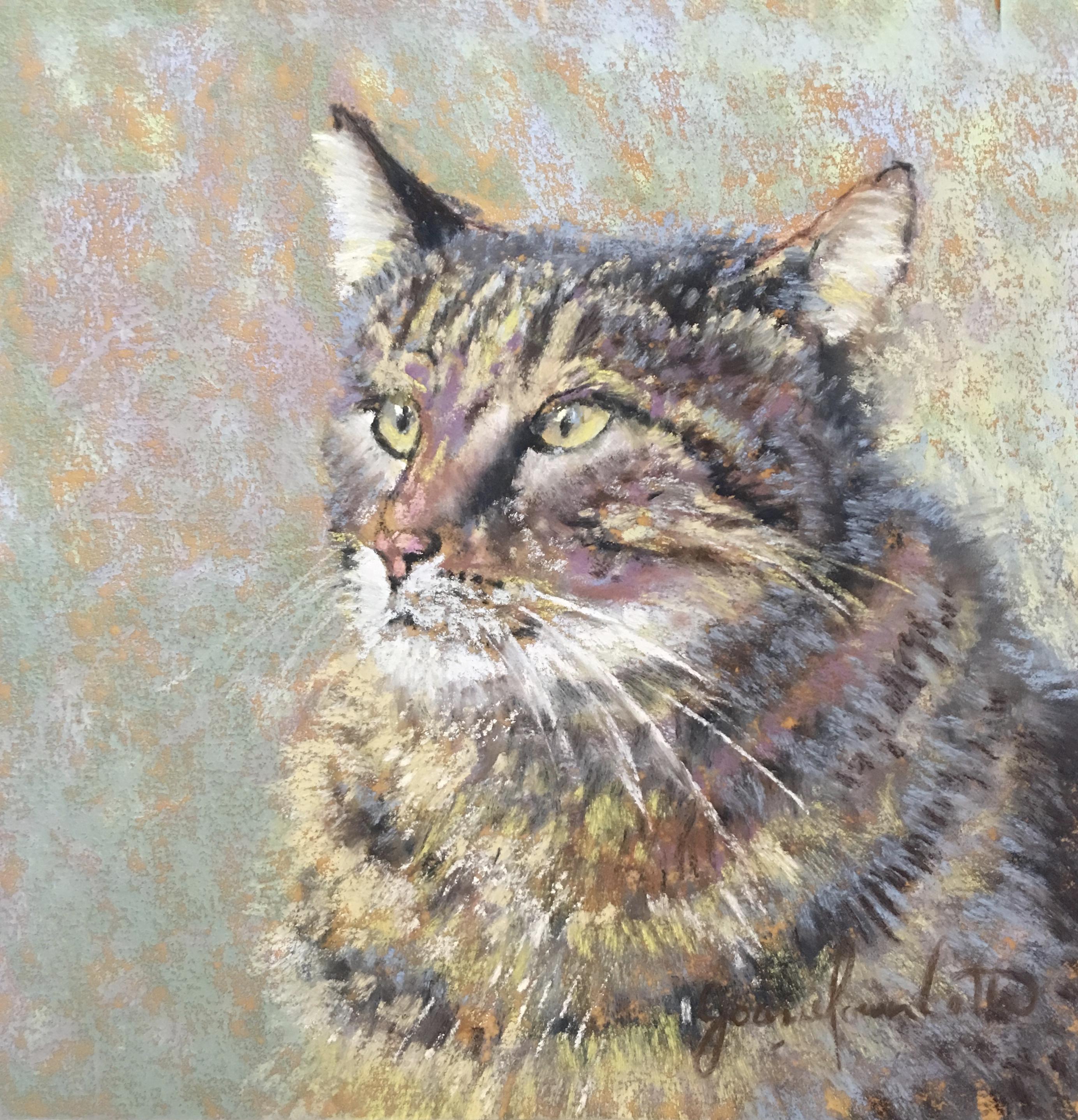Venetian Cat