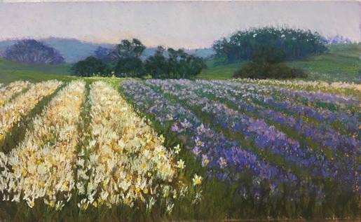 'Dreaming of Daffodils'