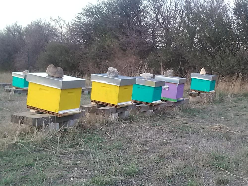 A toutes et tous ceux qui protègent et sauvegardent la biodiversité, les abeilles svou souhaitent une année pleine de miel.