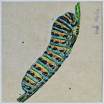 swallowtail caterpillar, modern art, wire art, wire painting, wirepictures.co.uk