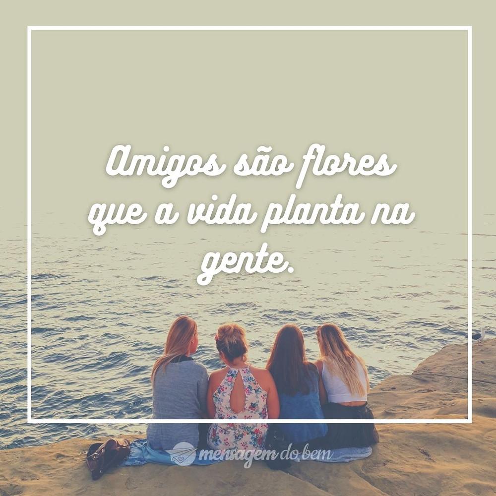 Amigos são flores que a vida planta na gente.