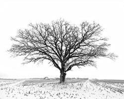 B&W Snow Tree 8x10_DxO2