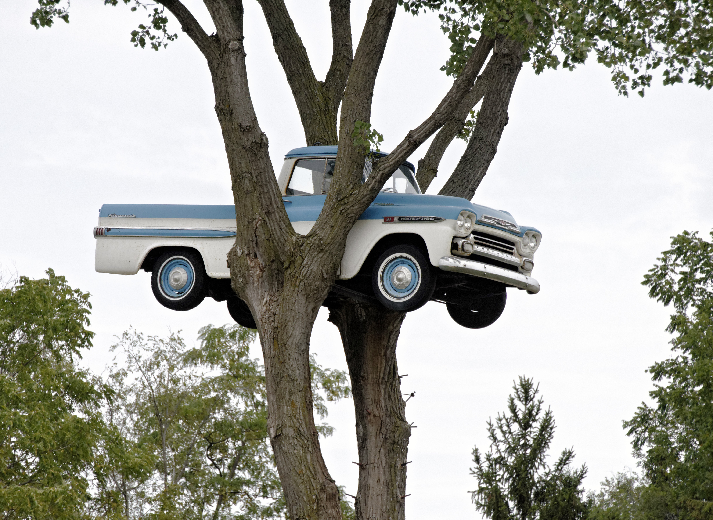 Tree Truck