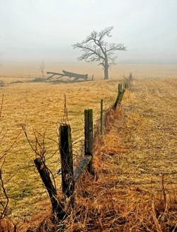 Foggy Fence2