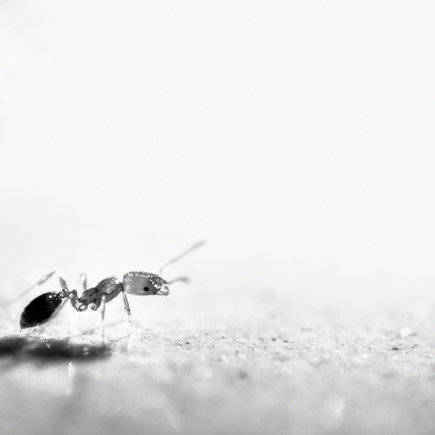 Night life of Ants