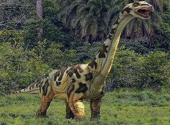 Ausstellung Dino Camarasaurus