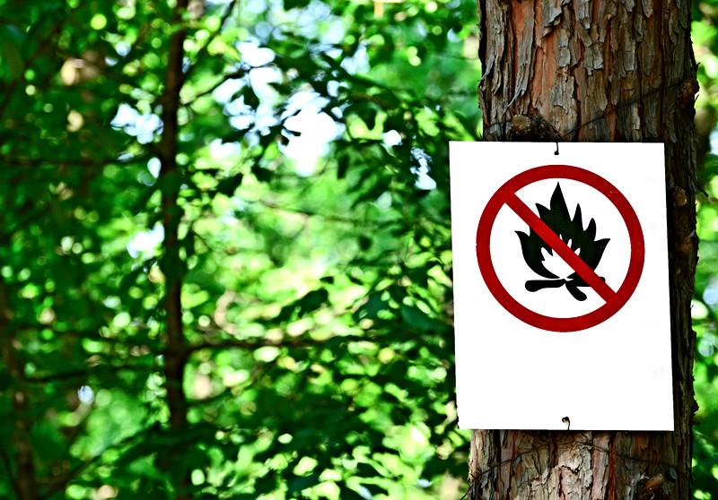 Interdiction feux en forêt