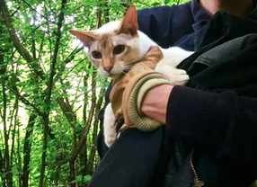 Sauvetage d'un chat à Penthalaz