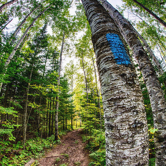 blue-blaze-of-the-superior-hiking-trail-