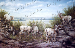 mountain-goats01-sm