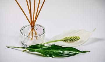 scent-1059419_1920.jpg