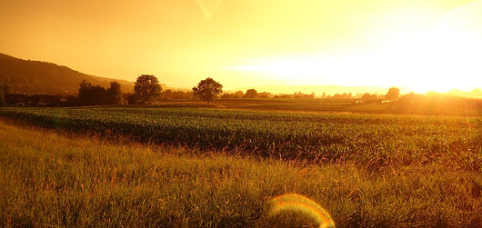 agriculture-cereal-countryside-crop-5879