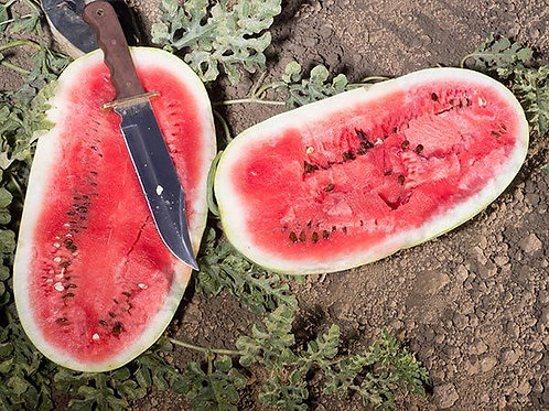 Watermelon Charleston Grey