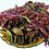 Thumbnail: Chinese Toon Toona sinensis Northern Red