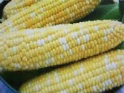 Corn Serendipity Triplesweet