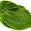 Thumbnail: Perilla Zi Su Green Shiso