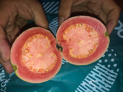 Taiwan Ruby Red Heart Guava Seeds