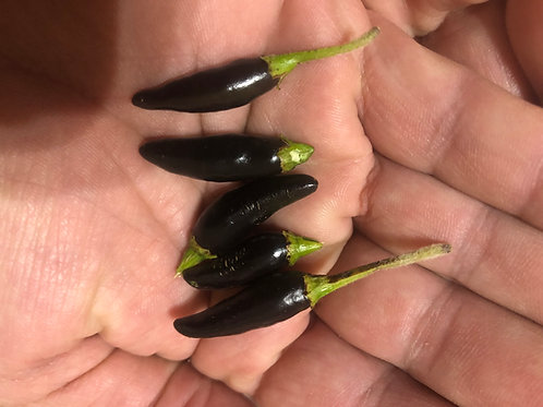 Black Cobra Hot Pepper