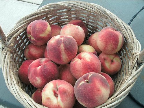 Artic Supreme White Peach