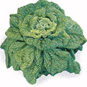 Chirimen Hakusai Lose Head (Napa Cabbage)