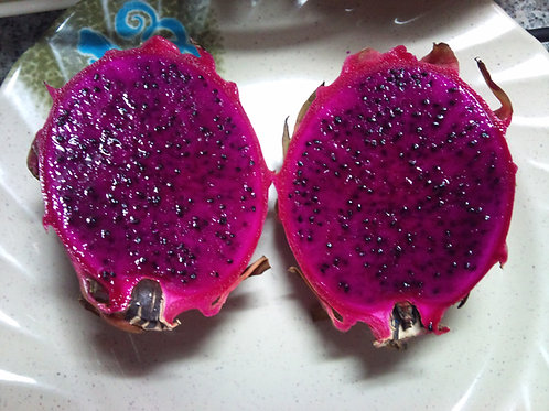 2 Rooted Perennial Purple Flesh Dragon Fruit