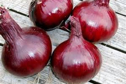 S071X01. Onion Southport Red Global