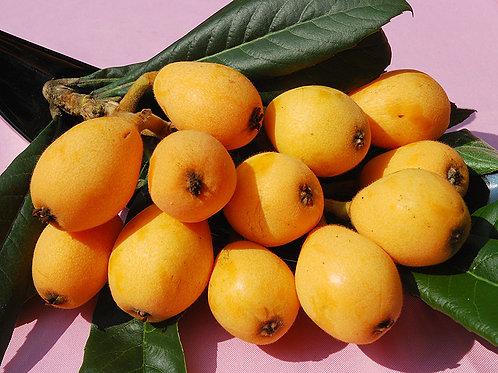 Loquat Fruit Eriobotrya japonica