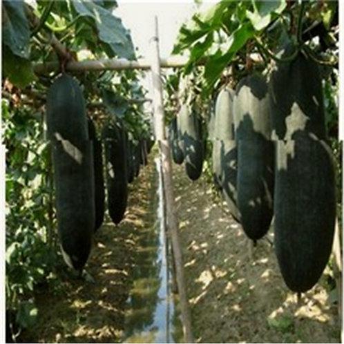 S130X01. Black Skin Winter Melon Seeds