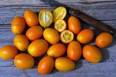 Kumquat fortunella japonica