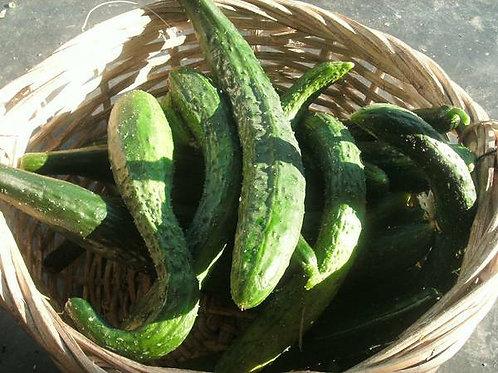Oriental Cucumber