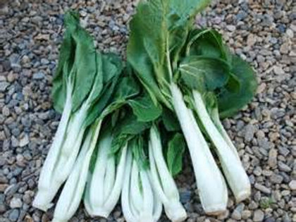 Long White Choy Sum Edible Flower Rapa