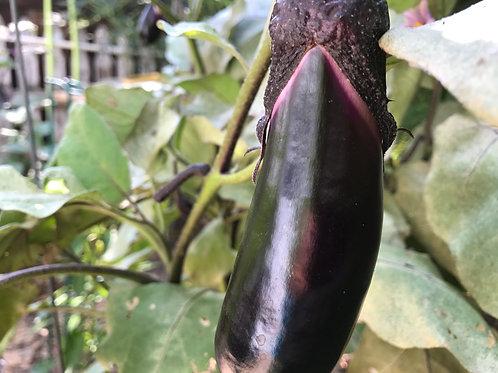 Japanese Long Eggplant